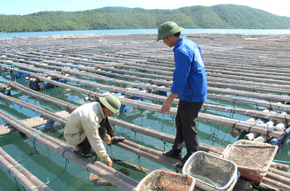 Minh Hiếu - công ty cung cấp Hóa chất ngành thủy sản uy tín, giá rẻ