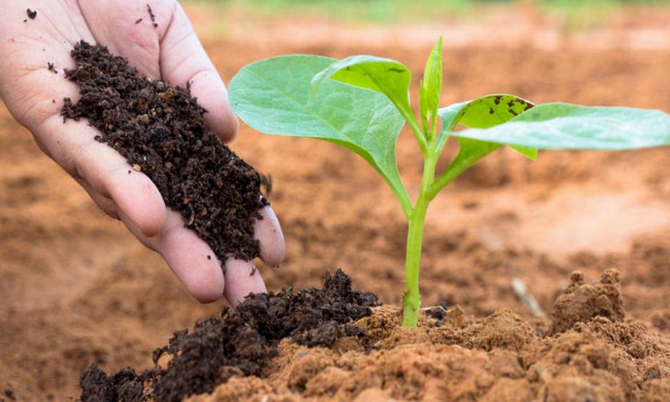 Hóa chất nông nghiệp là gì?
